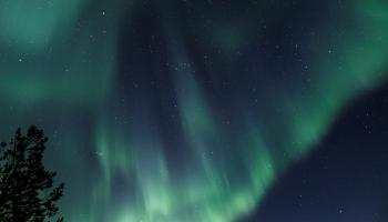 The Aurora seen by PLIP